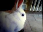 Stellina - (1 anno)