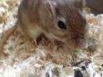 benny - Maschio (2 anni)