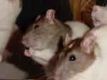 Krümel&Snowsy - Maschio (4 mesi)