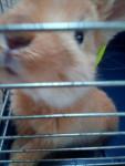 Ania - (5 mesi)